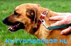 ebcsontodu partner - kutyamasszor