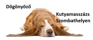 ebcsont kutyamasszőr