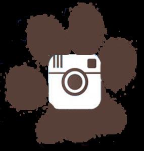 Ebcsont Masszázs Odú - Terápiás Kutyamasszázs instagram